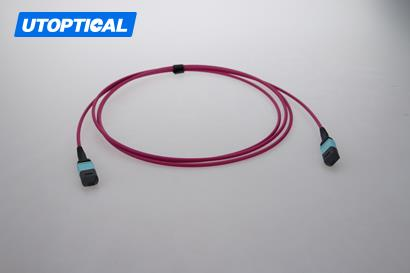 3m (10ft) MTP Female to MTP Female 24 Fibers OM4 50/125 Multimode Trunk Cable, Type C, Elite, LSZH, Magenta